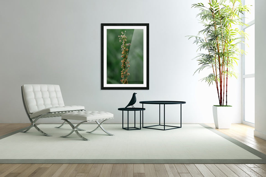 Grass in Custom Picture Frame