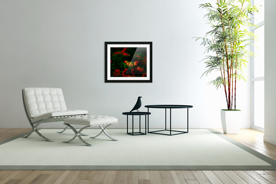 Monarch butterfly in Custom Picture Frame