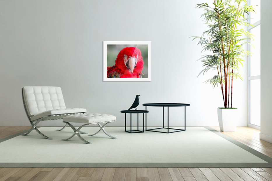 Red Parrot  in Custom Picture Frame