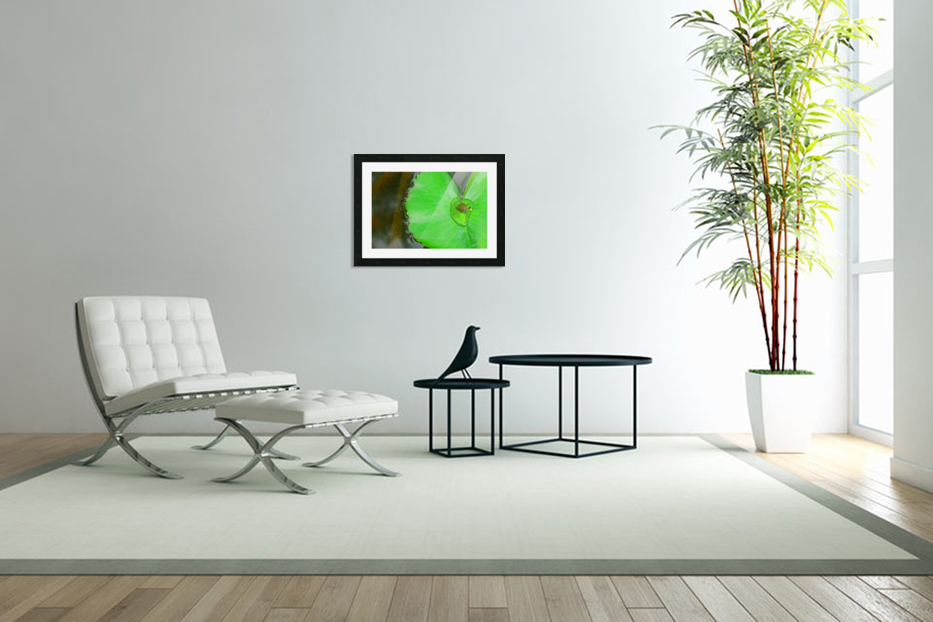 Lily Pad in Custom Picture Frame