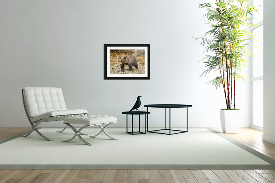 Grizzly Youngster in Custom Picture Frame