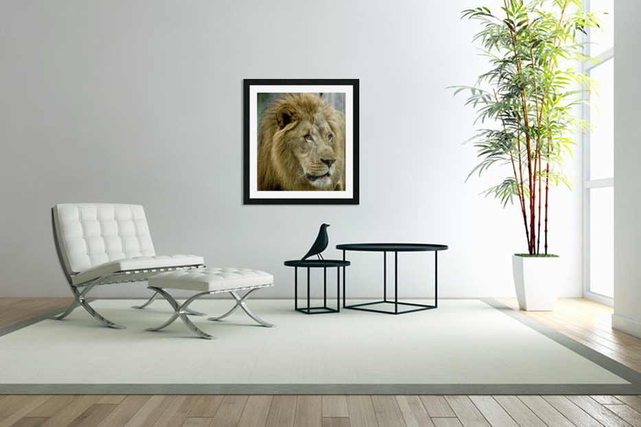 Extreme close up Lion in Custom Picture Frame