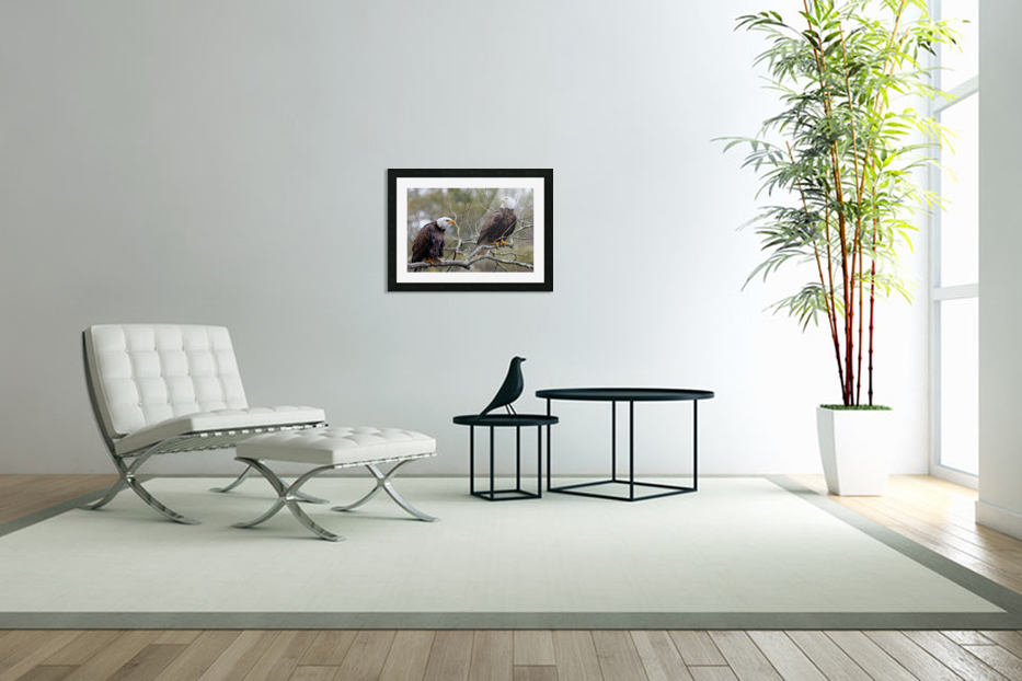Bald Eagles in Custom Picture Frame