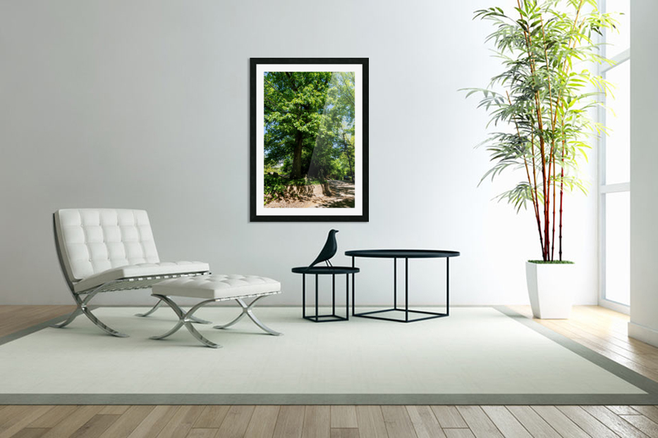 Tree Than Owns Itself   Athens GA 06567 in Custom Picture Frame