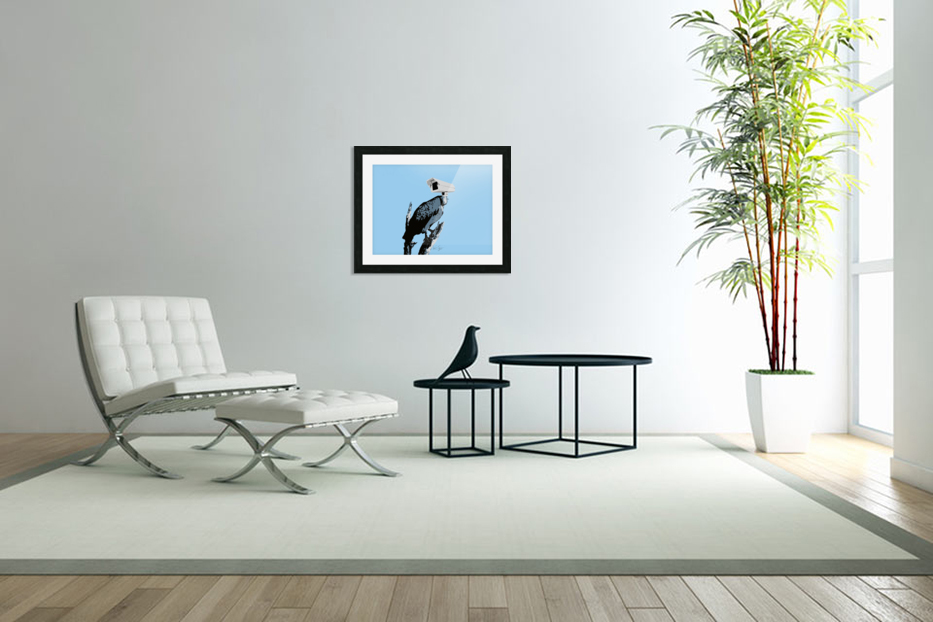 Vultures in Custom Picture Frame