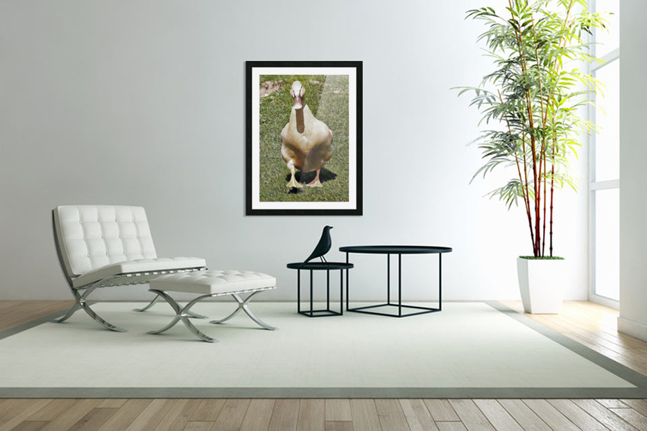 Buff Orpington Duck in Custom Picture Frame