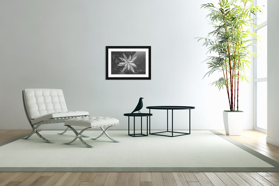 Symmetry of the nature in Custom Picture Frame