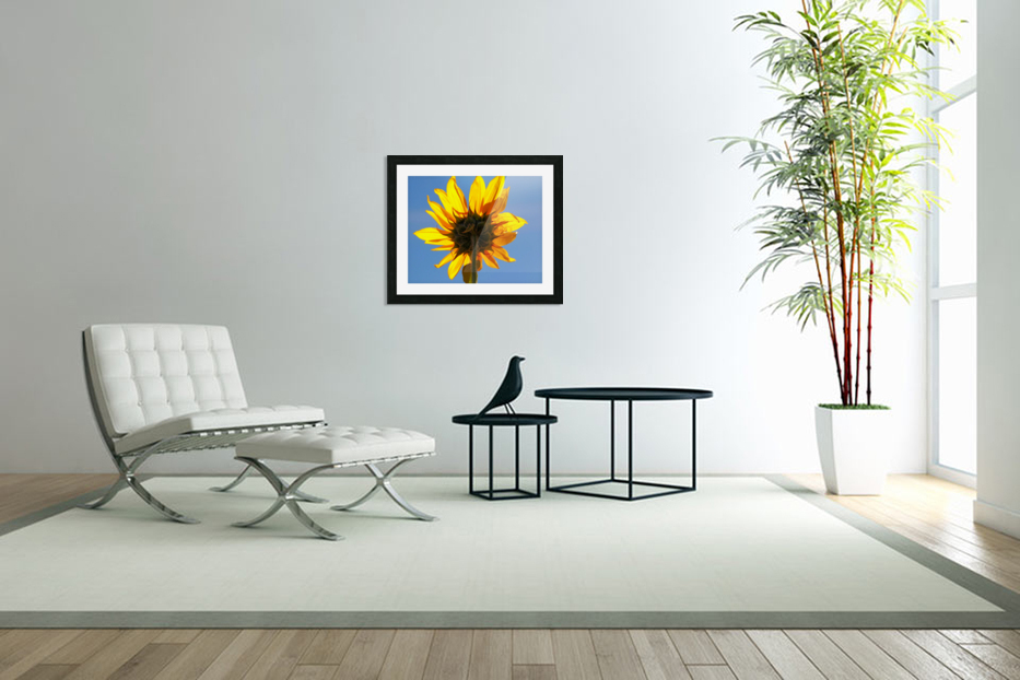 Glowing Heliopsis in Custom Picture Frame