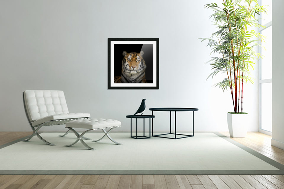 Tiger face in Custom Picture Frame