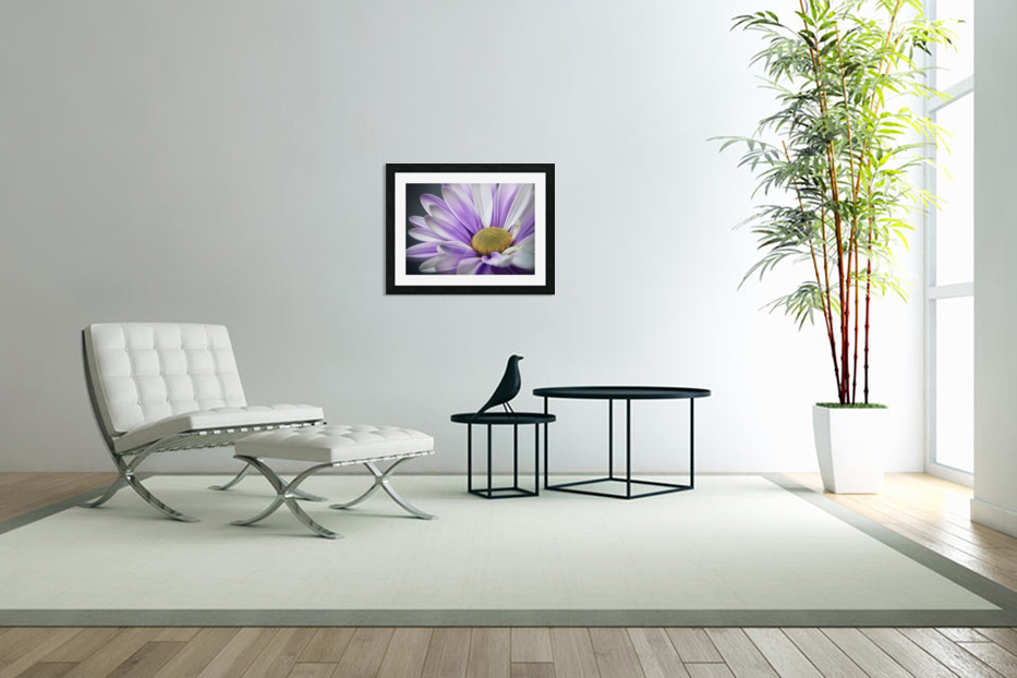 Purple Daisy in Custom Picture Frame