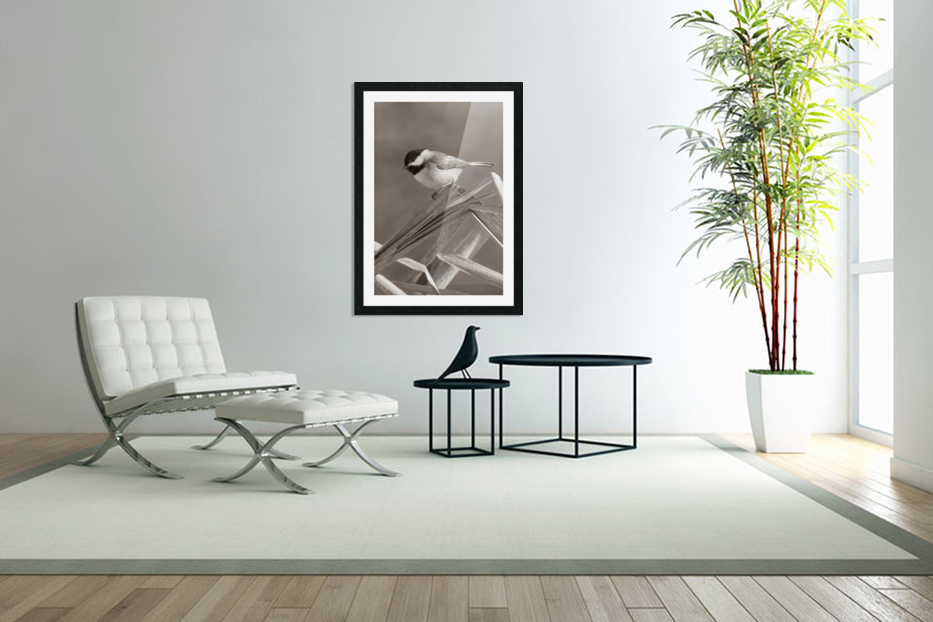 Black Capped Chickadee ap 1592 B&W in Custom Picture Frame