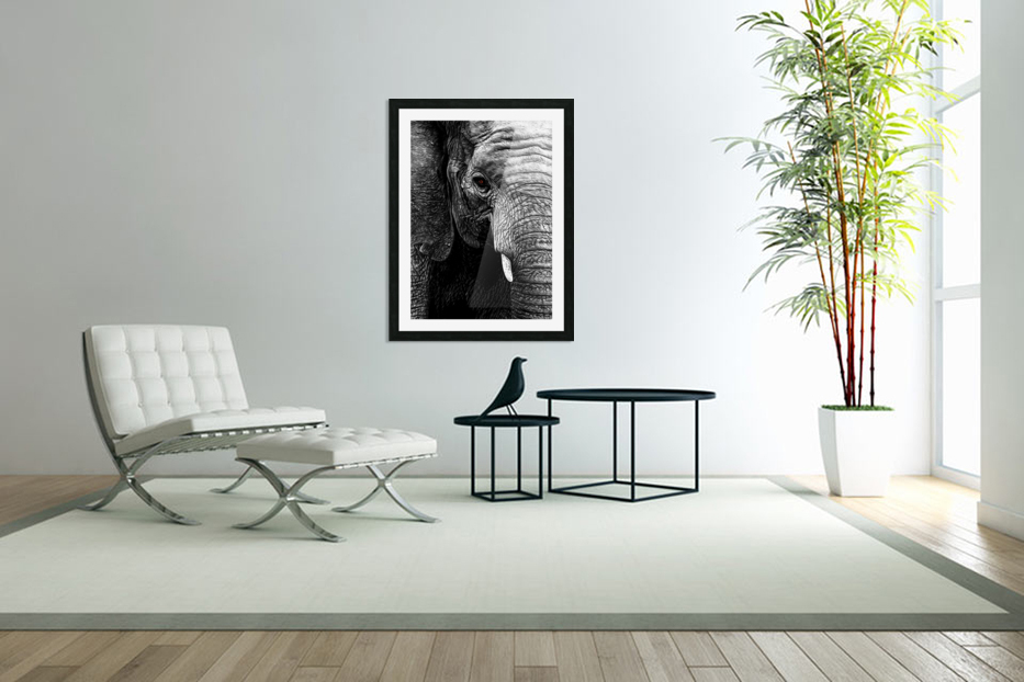 Elephant in Custom Picture Frame