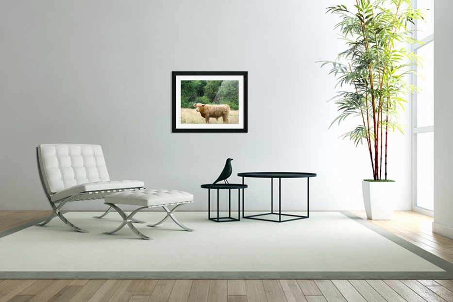 Hairy Coo - Scottish Highlands in Custom Picture Frame