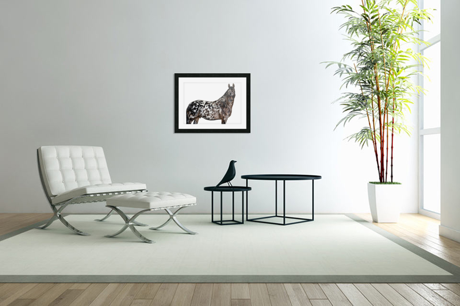 Spotted Horse Portrait in Custom Picture Frame