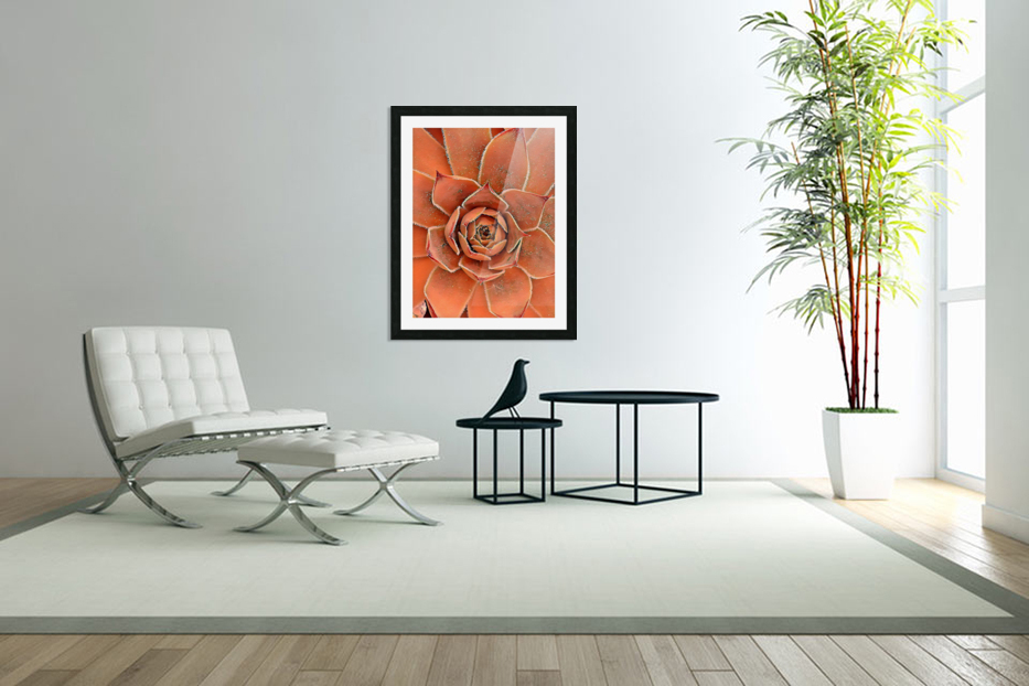 Spiral in Custom Picture Frame