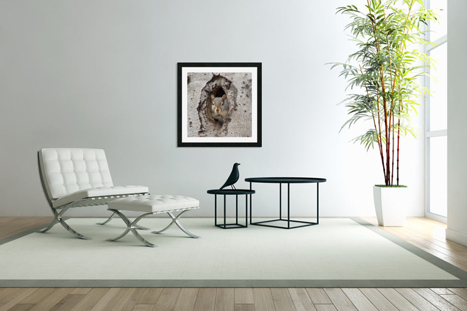 Squirrel in tree hole in Custom Picture Frame
