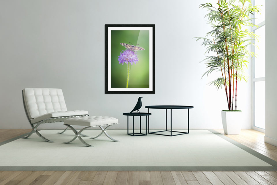 Butterfly in Custom Picture Frame