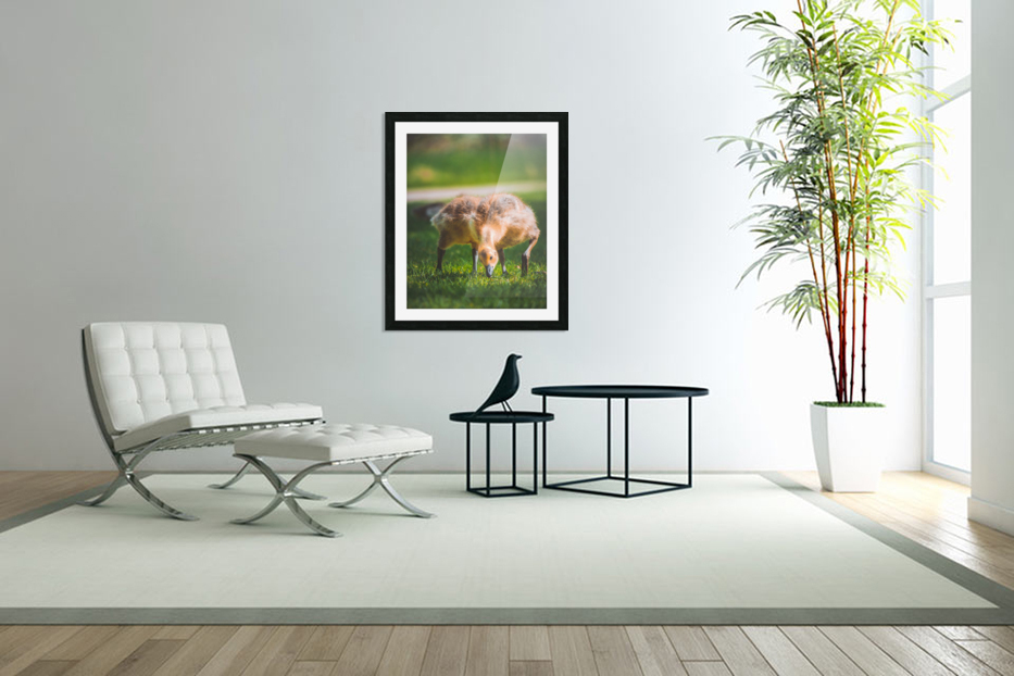 Gooses  in Custom Picture Frame