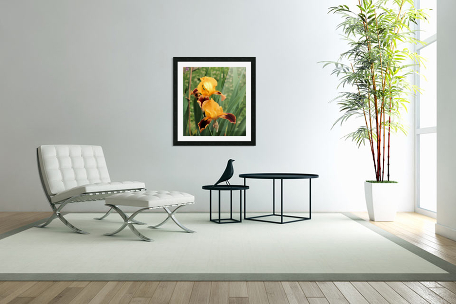 Yellow Brown Iris in Custom Picture Frame