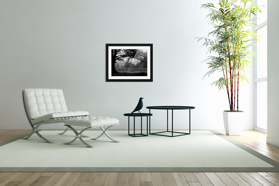 Black and White Field in Custom Picture Frame