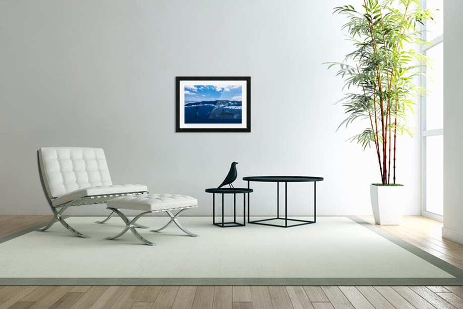 Between air and water with the dolphins in Custom Picture Frame