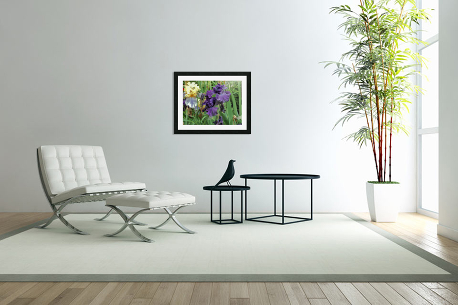 Two Iris in Custom Picture Frame