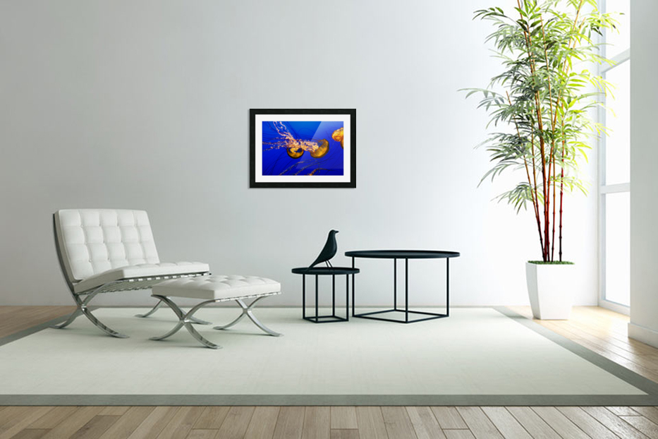 Monterey Jellyfish in Custom Picture Frame