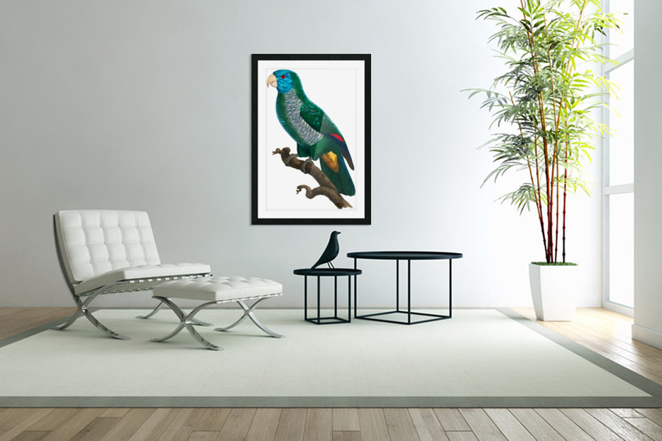 Yellow and Green Parrot Art Print Digital Download Vintage French Bird Illustration Printable Coastal Tropical Wall Art in Custom Picture Frame