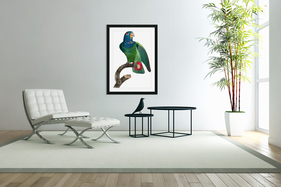 Parrot Print Antique Space Painting Vintage Drawing Poster Wall Art vintage animal parrot photo Tropical Parrot Art  in Custom Picture Frame