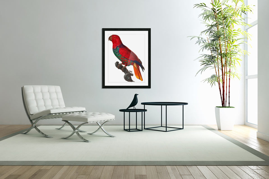 Parrot Print Antique Space Painting Vintage Drawing Poster Wall Art Eclectus Parrot Vintage parrot print Parrot Poster Print  in Custom Picture Frame