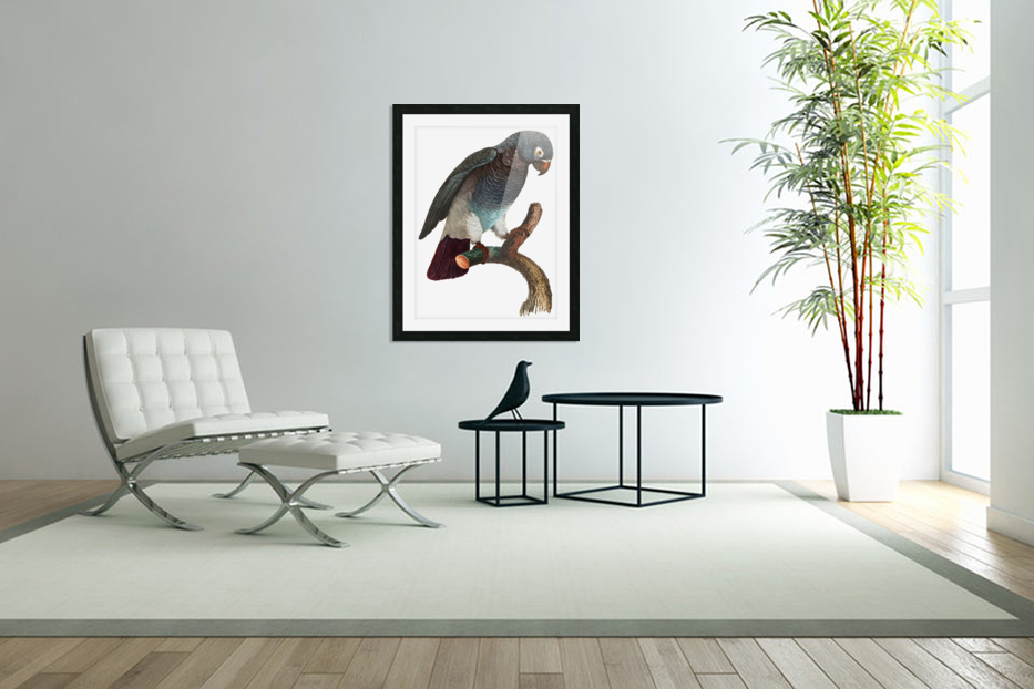 Macaw - Birds - Paradise - Tropical- Art Print - Wall Art - Parrot in Custom Picture Frame