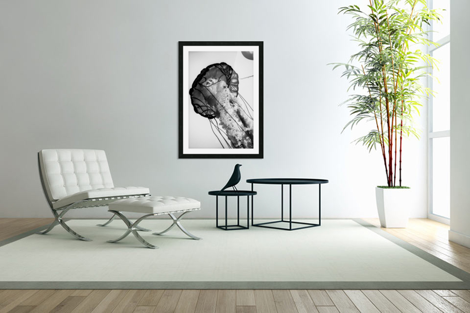 B&W Jelly in Custom Picture Frame