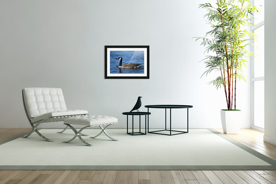 Canada Goose on water in Custom Picture Frame