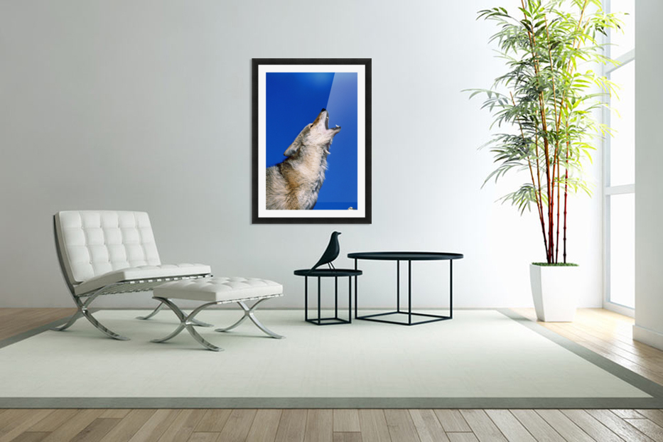 Howling Coyote in Custom Picture Frame
