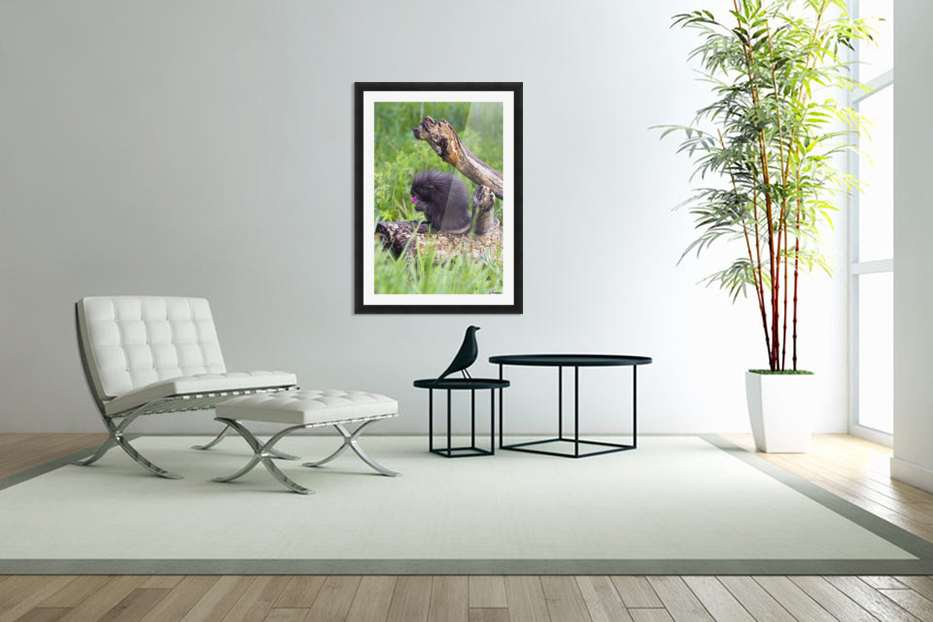 Porcupine Baby Eating Flower in Custom Picture Frame