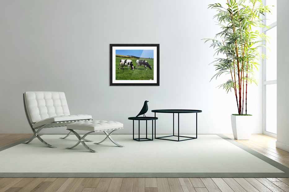 County Cork, Ireland, Dairy Cattle in Custom Picture Frame