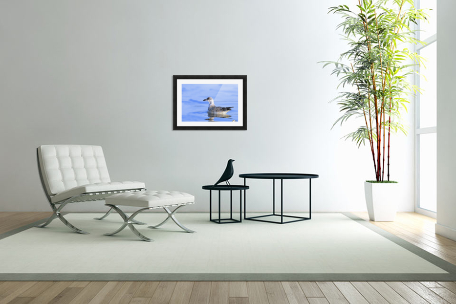 Young Gull Swimming in Custom Picture Frame