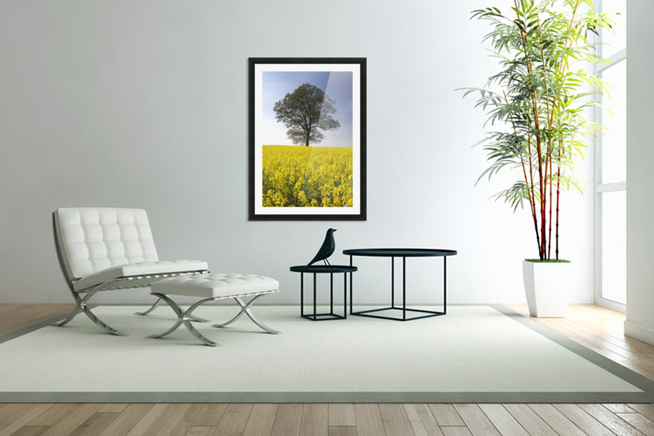Tree In A Rapeseed Field, Yorkshire, England in Custom Picture Frame