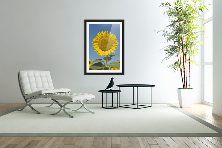 Sunflower (Helianthus Annuus) in Custom Picture Frame