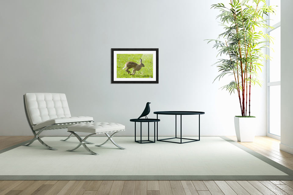 Hare Hopping In The Grass in Custom Picture Frame