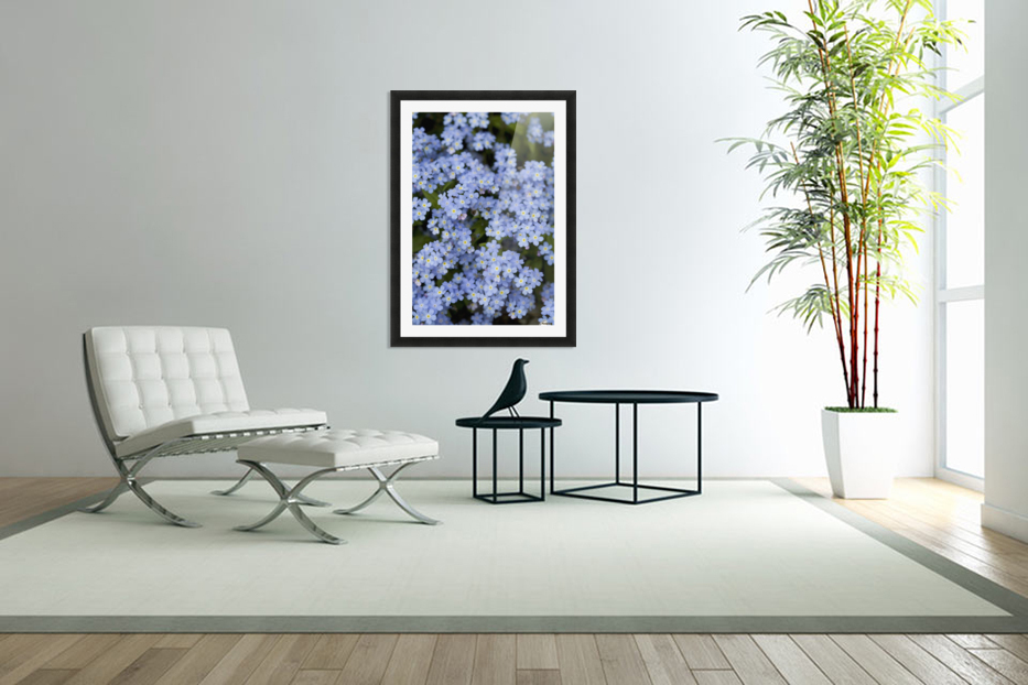 Victoria, British Columbia, Canada; Blooming Blue Flowers in Custom Picture Frame