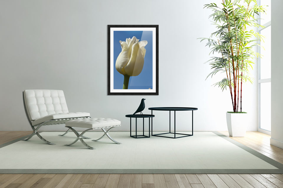 A White Tulip Against A Blue Sky; Northumberland, England in Custom Picture Frame