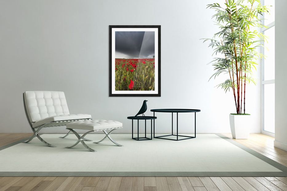 A Field Of Red Poppies Under A Dark Stormy Sky; Northumberland, England in Custom Picture Frame