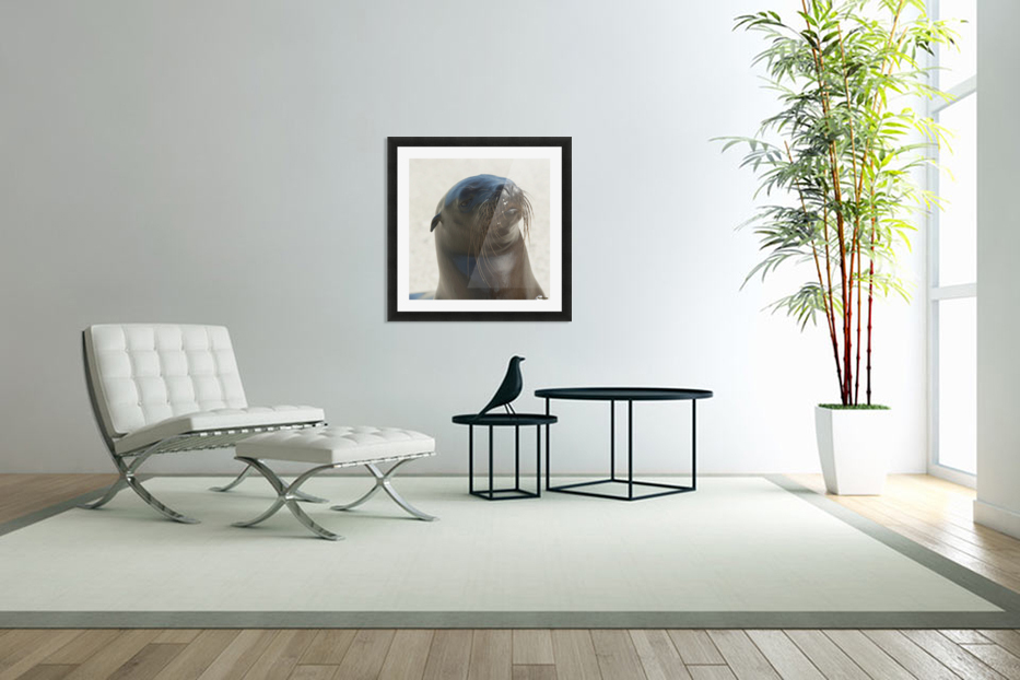 Sea Lion; Galapagos, Equador in Custom Picture Frame