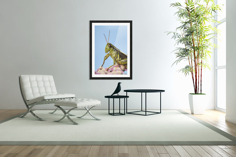 Grasshopper Close-Up. in Custom Picture Frame
