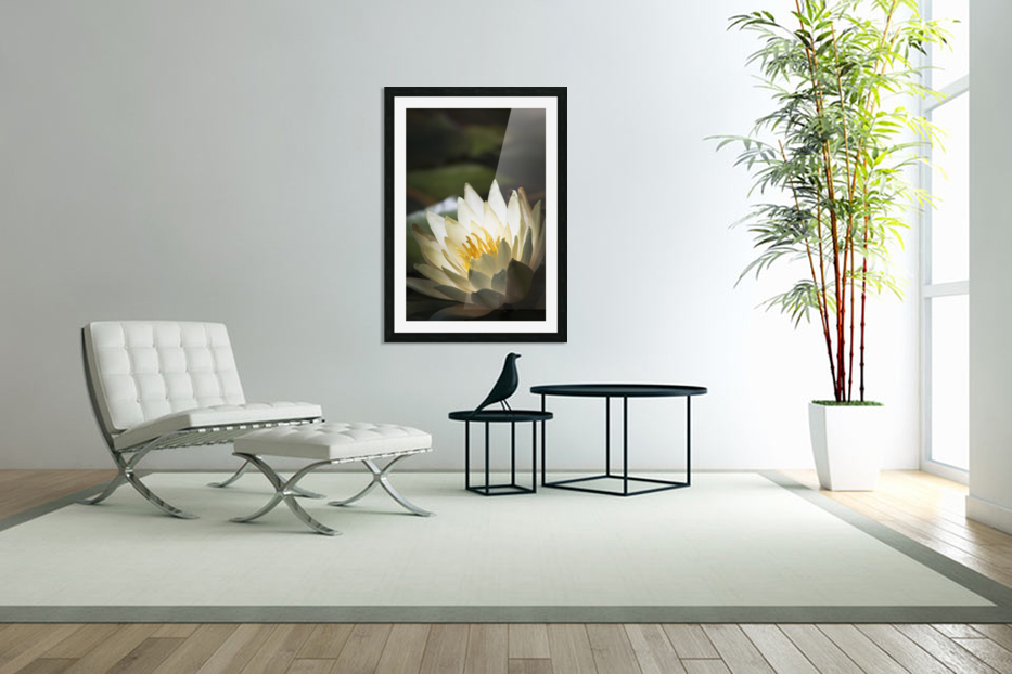 Water lily blooms in a pond; Astoria, Oregon, United States of America in Custom Picture Frame