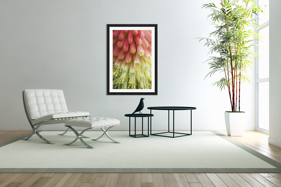 A red-hot poker plant blooms in a garden; Astoria, Oregon, United States of America in Custom Picture Frame