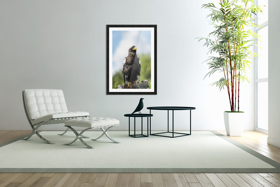 Golden Eagle, Assiniboine Park Zoo; Winnipeg, Manitoba, Canada in Custom Picture Frame