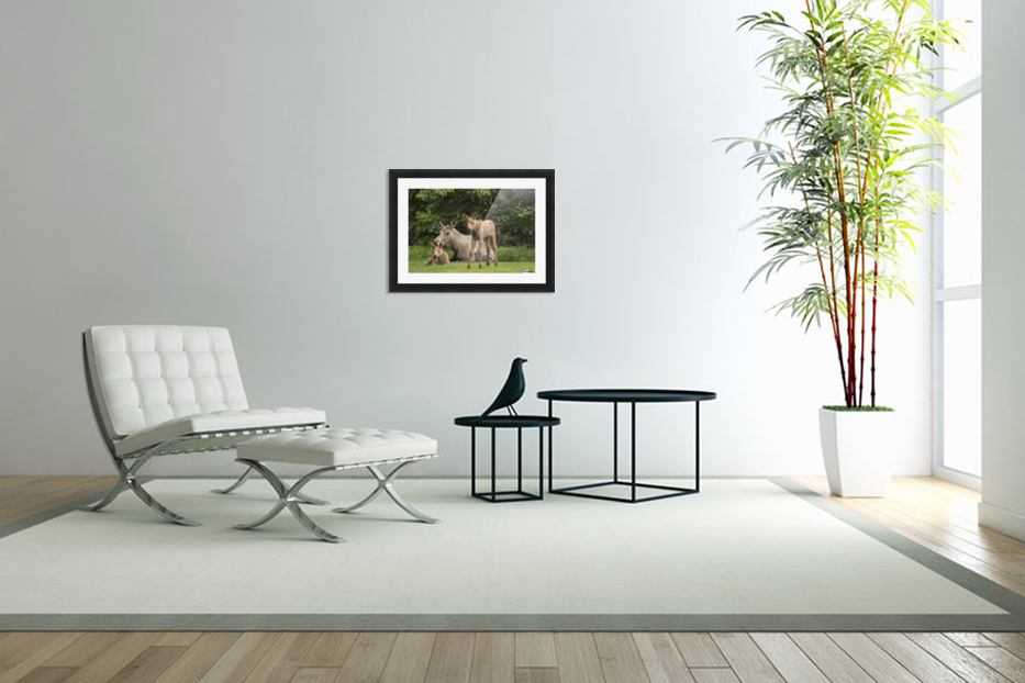 A cow moose (alces alces) relaxes on a lawn with her twin calves; Anchorage, Alaska, United States of America in Custom Picture Frame