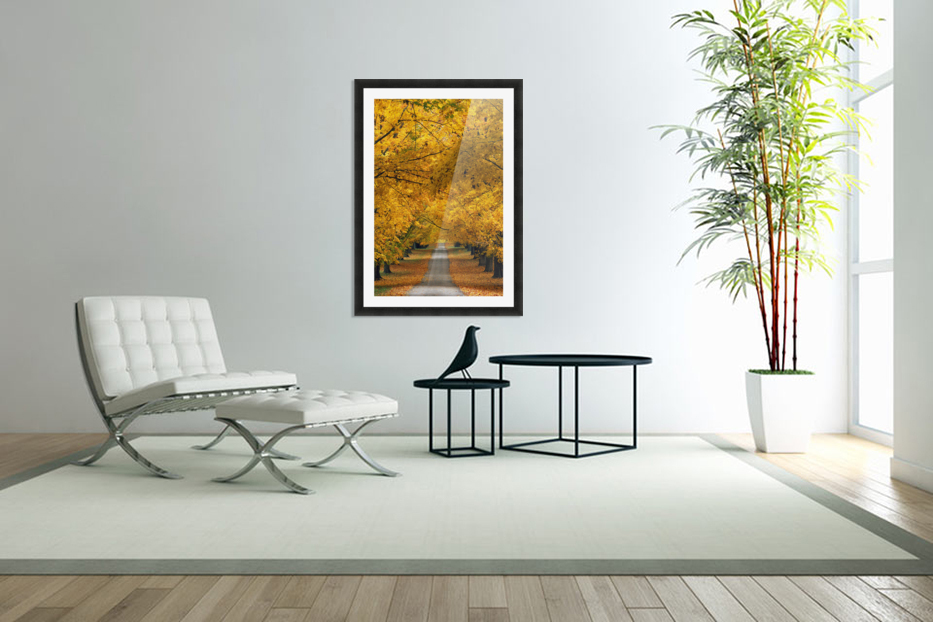 Trees In Autumn in Custom Picture Frame